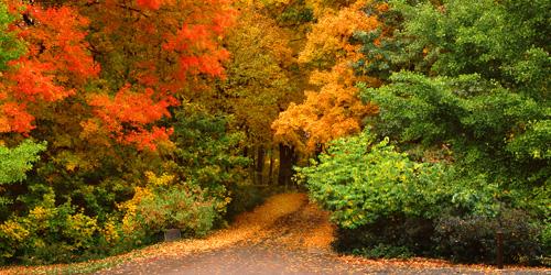 Three-Mile-Drive-Fall-Portal