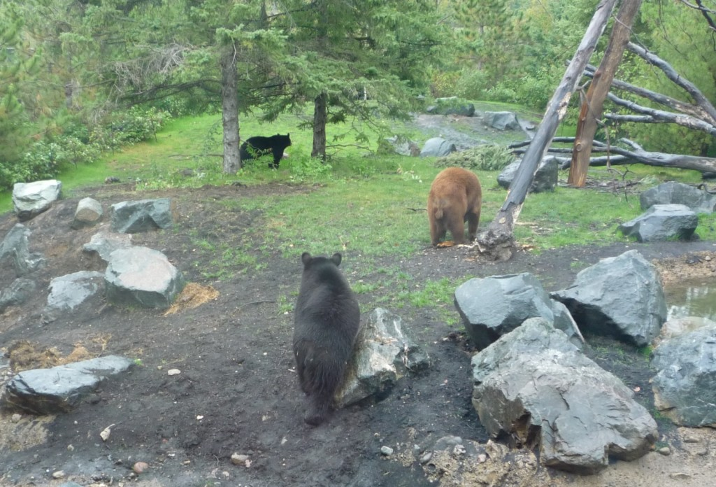 Three bears cropped